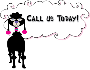 Call today - Poodle Image